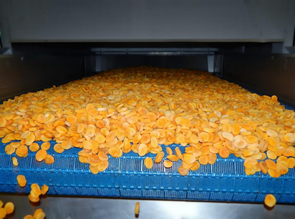 process-abricots